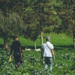 projet agroforestier de capte en tunisie